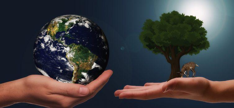 Lokální či světové? Které je lepší a proč?